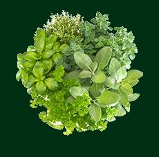 Пряно-ароматические травы на заказ