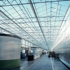 Модернизированные теплицы - один из самых современных агрокомплексов Оренбуржья!